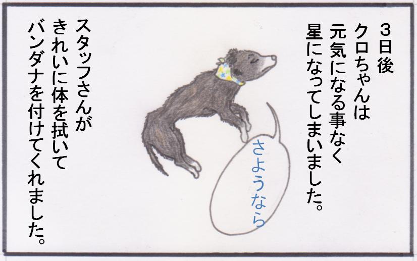 くろちゃん③.PNG